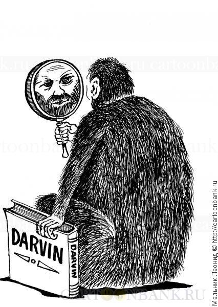 Карикатура. Дарвин. Большая обезьяна смотрит в зеркало и видит в нем лицо Чарлза Дарвина. Обезьяна, зеркало, книга, Чарлз Дарвин,эволюция