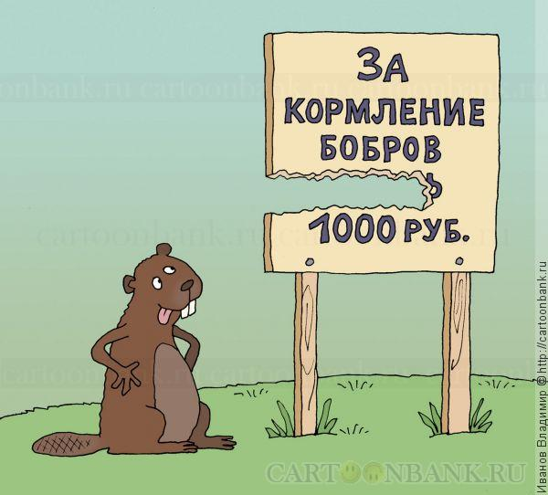 http://cartoonbank.ru/wp-content/plugins/wp-shopping-cart/product_images/4dfc2e90ea65b6.43619235bobrov_kormit.jpg